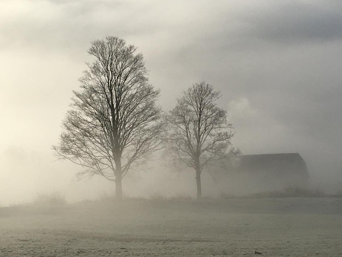 Gmundnerberg, Bäume im Nebel, Fotografie, 2020
