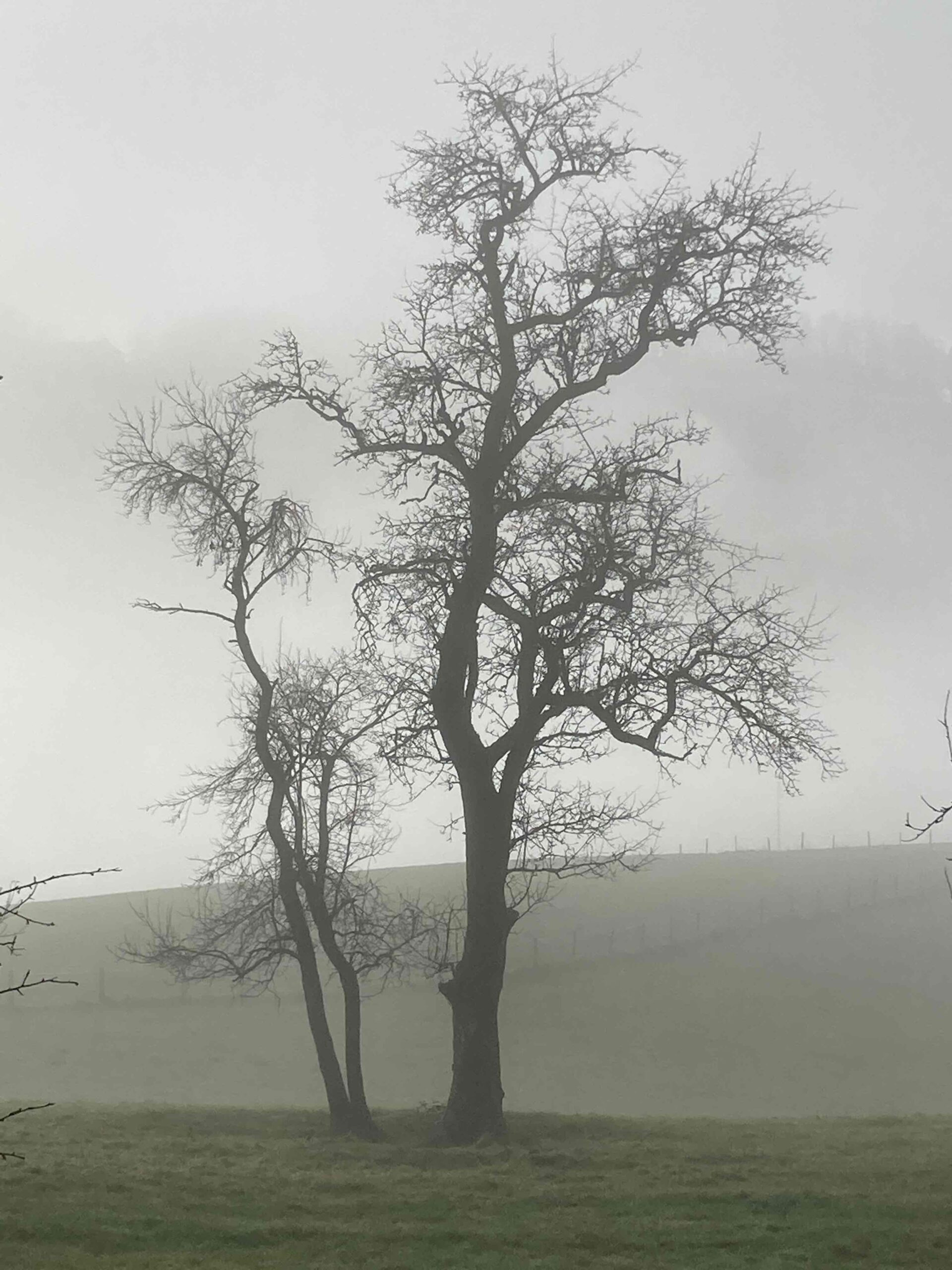 Bäume im Nebel (2), Fotografie, 2020