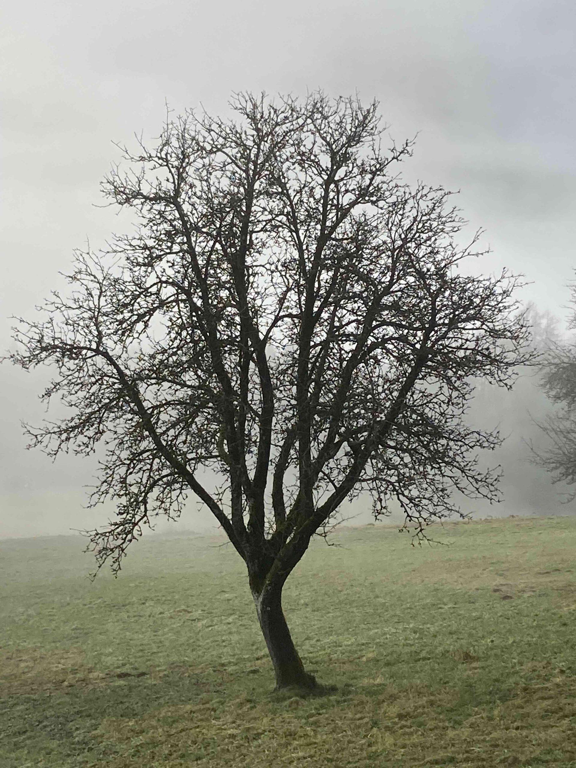 Baum, Fotografie, 2020